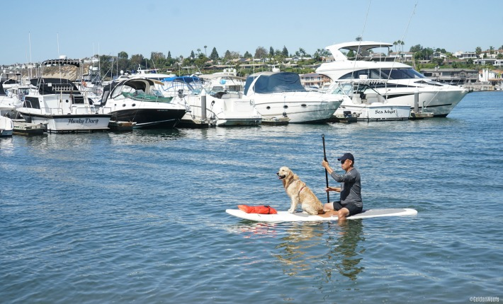 Surf City Surf Dog: SUP Dog Pirate Coast