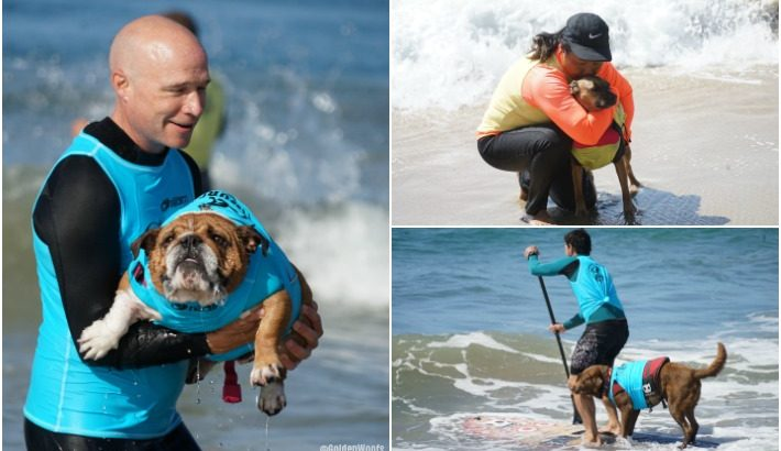 Surf Dogs Hanging 20 {video} #surfcitysurfdog