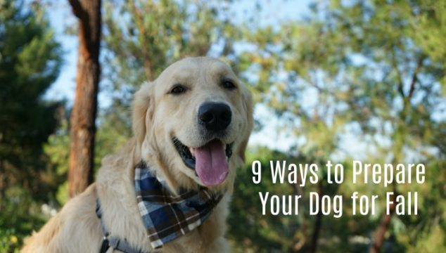 9 Ways to Prepare Your Dog for Fall