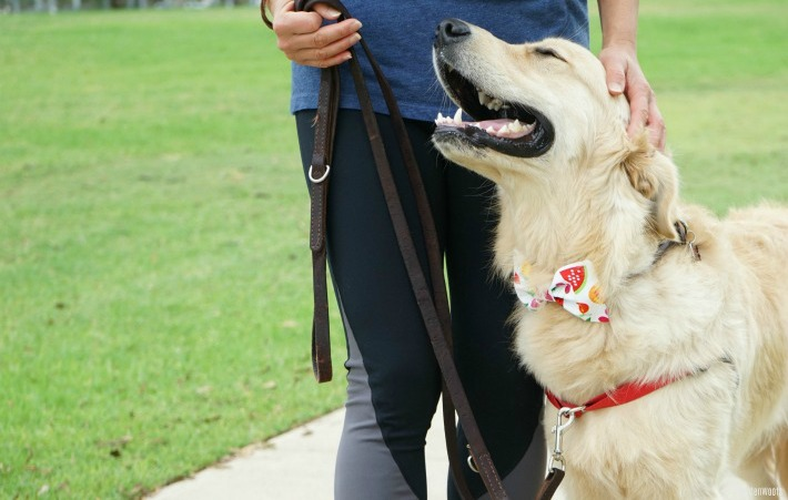 Training using rewards is incredibly bonding for you and your dog