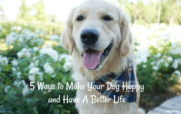 5 Ways to Make Your Dog Happy and Have A Better Life