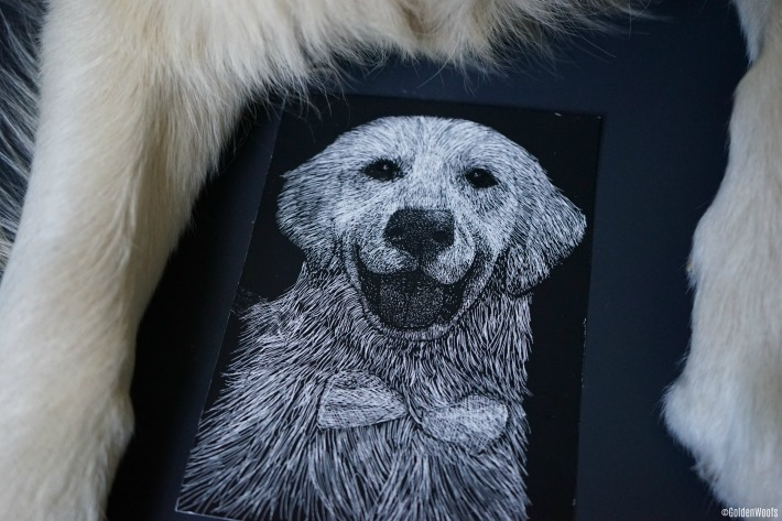 golden retriever scratchboard pet portrait
