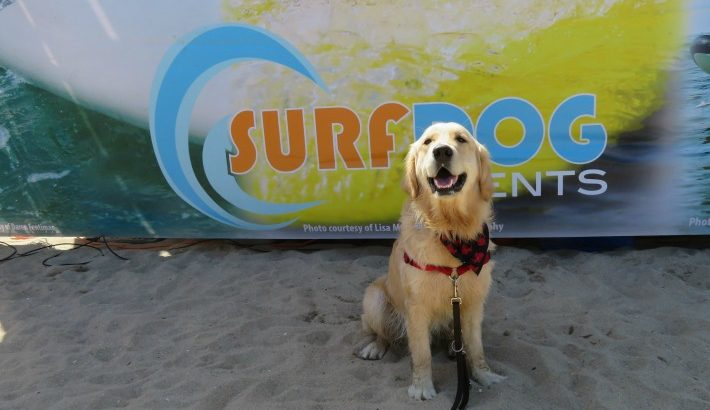 Three Day Surf City Surf Dog Event #surfcitysurfdog