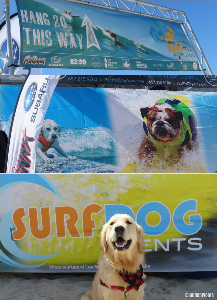 Surf City Surf Dog Event Competition Huntington Beach