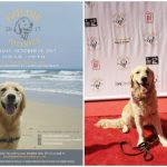 PAWmazing Golden Day | Goldie Palooza 2017