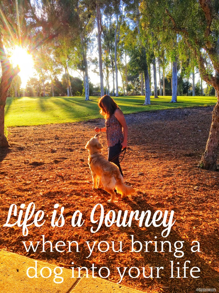 Life Journey with your dog