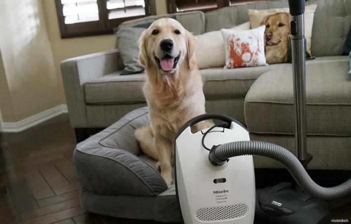 Miele's Classic C1 Cat & Dog Vacuum