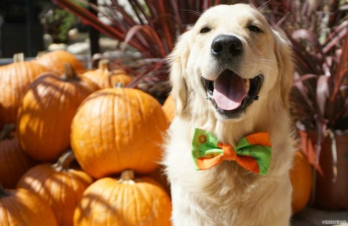 Pumpkin Time! Happy October