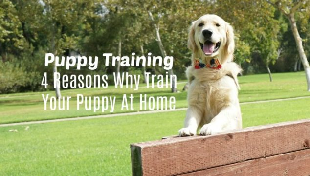 Puppy Training | 4 Reasons Why Train Your Puppy At Home #RaisingPuppy