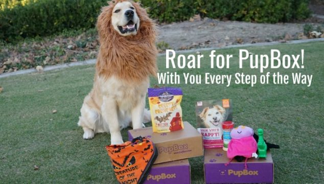 Roar for PupBox! With You Every Step of the Way