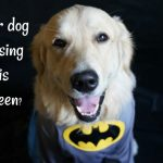 Will your dog be dressing up this Halloween?
