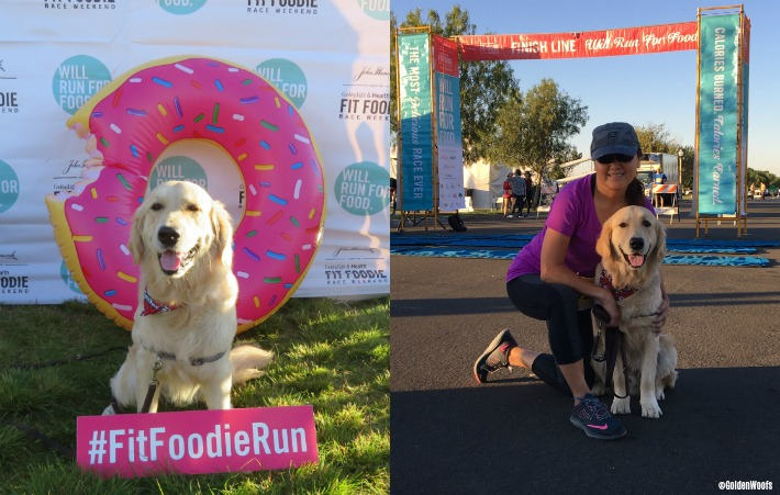 dog friendly fit foodie run