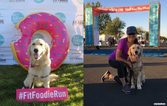 dog friendly fit foodie run