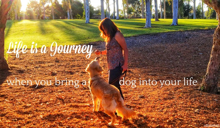 Dogs are Family | New Life Journey with Koru Bear