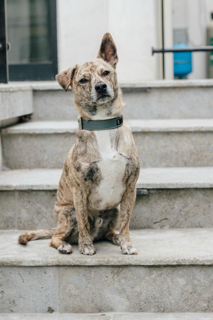 Maverick - Katherine Schwarzenegger's adopted dog