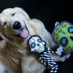 5 Facts About Day of the Dead | goDog Sugar Skullz Dog Toys
