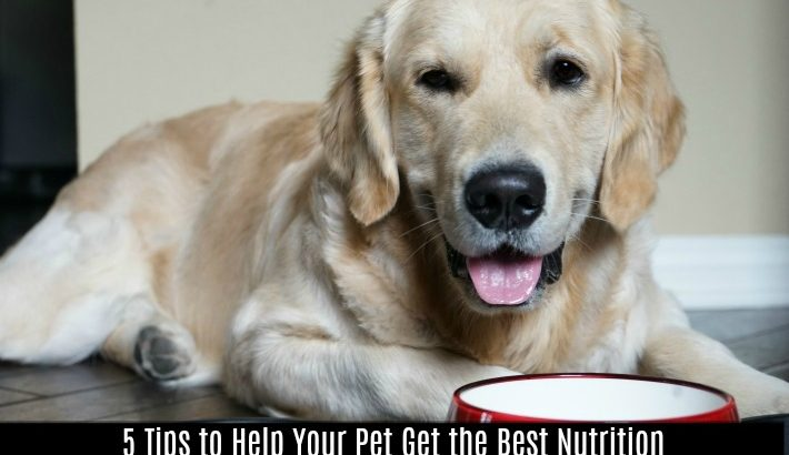 5 Tips to Help Your Pet Get the Best Nutrition from Dr. Evan Antin