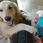 2 Ways to Safely Remove Pet Stains and Odors #AquavertClean