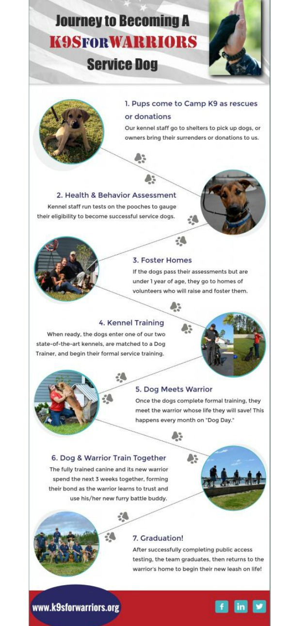 Infographic Becoming K9s For Warriors Service Dog