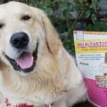 Golden Woofs KORU BEAR Featured in Bake It Up!