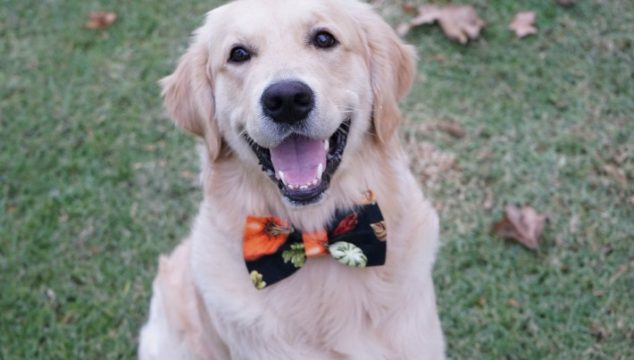 5 Tips for a Safe and Happy Pet Friendly Holiday