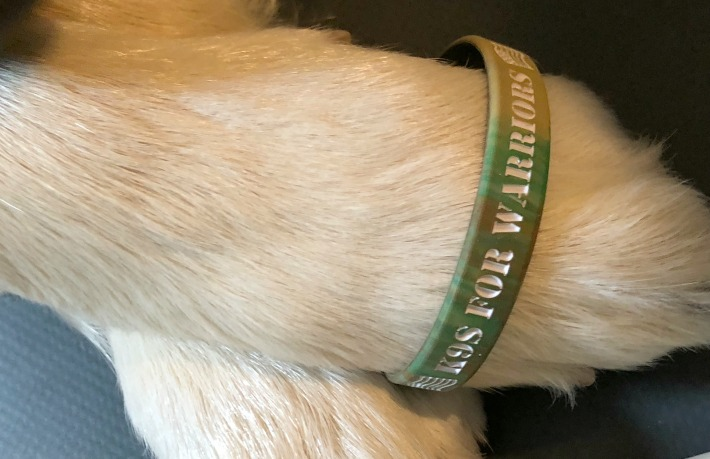 "K9s For Warriors helping give a new ""leash"" on life to rescue dogs and military heroes"