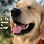 Be Thankful ... Appreciate Wonderful Moments