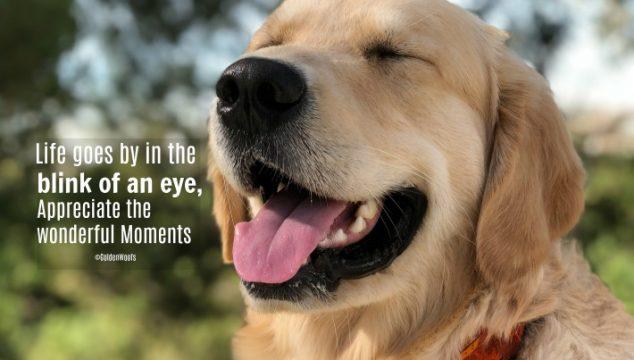 Be Thankful … Appreciate Wonderful Moments
