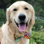 Dress Up Your Dog in Style with Golden Woofs Bow Ties