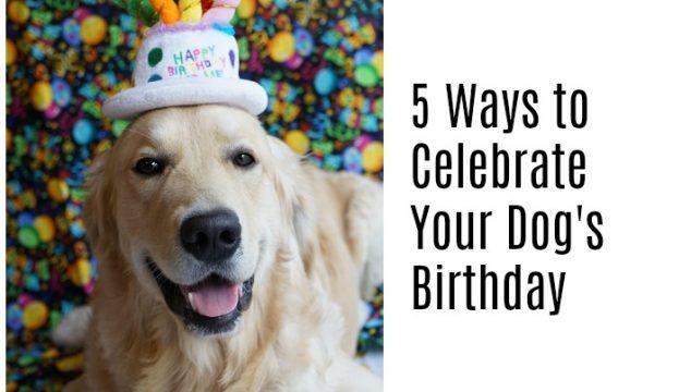 5 Ways to Celebrate Your Dog's Birthday