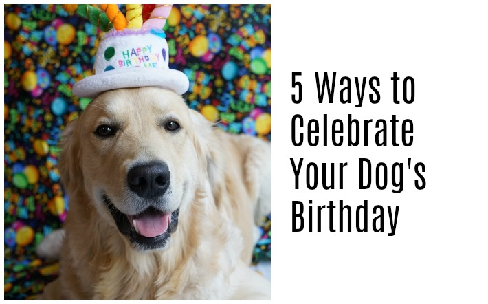 5 Ways to Celebrate Your Dog's Birthday - Golden Woofs