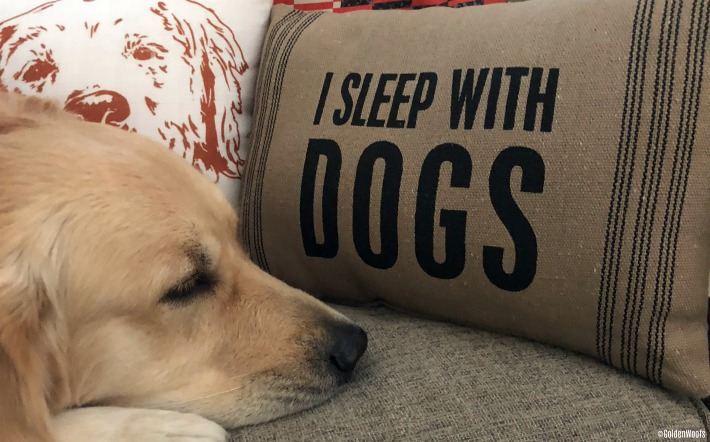 Chewy I Sleep With Dogs Home Decor Pillow
