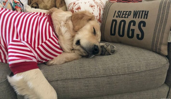 I Sleep With Dogs Home Decor Pillow #ChewyInfluencer