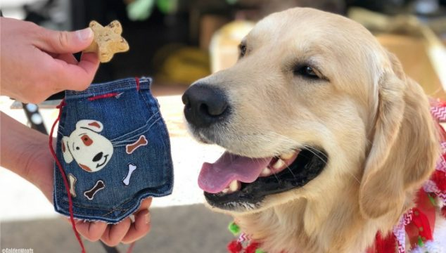 DIY No-Sew Denim Dog Treat Pouch #BlueBuffalo