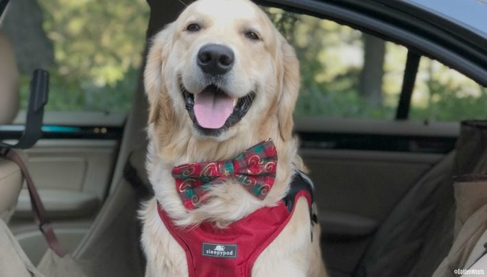 Holiday Pet Travel Tips Plus Gift Ideas