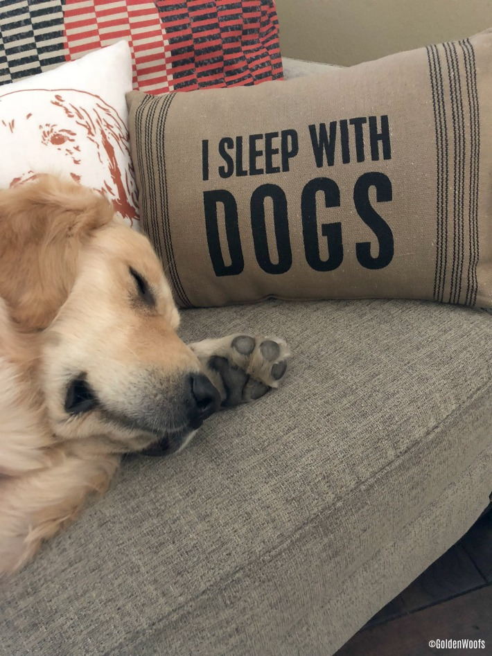 I Sleep With Dogs Home Decor Pillow