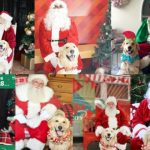Pawmazing Santa Adventure