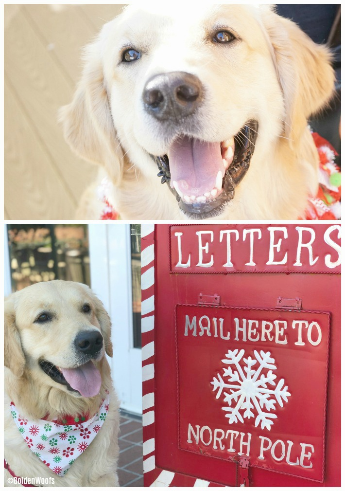 Have a Letter for Santa? North Pole Mailbox