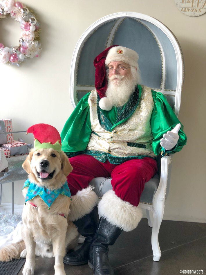 golden retriever met a regal santa