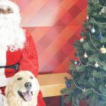 Koru Bear Met Santa Paws For A Cause at Petco