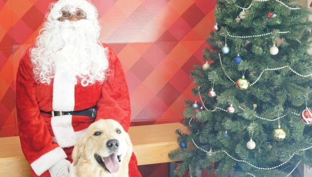 Koru Bear Met Santa Paws For A Cause at Petco