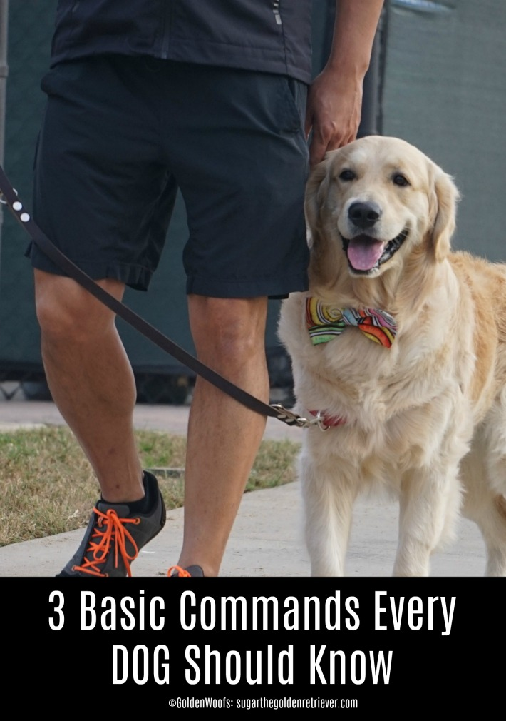 3 Basic Commands Every Dog Should Know and # ...