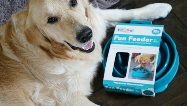 Your Dog Needs A Fun Feeder SloBowl #ChewyInfluencer