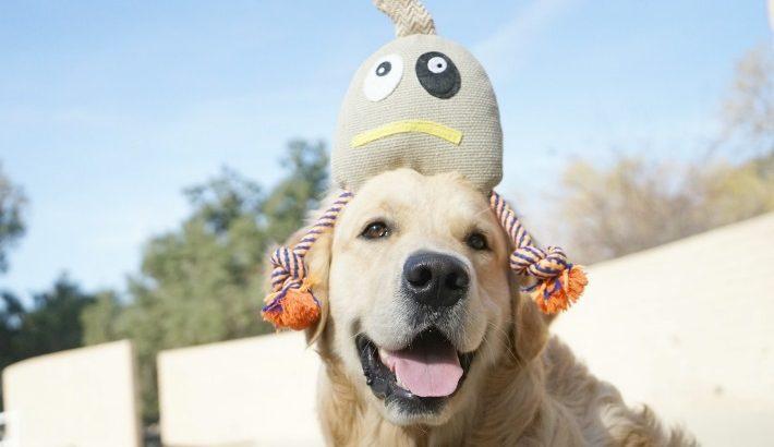 PoochMo Dog Toys | More Pooch More Love