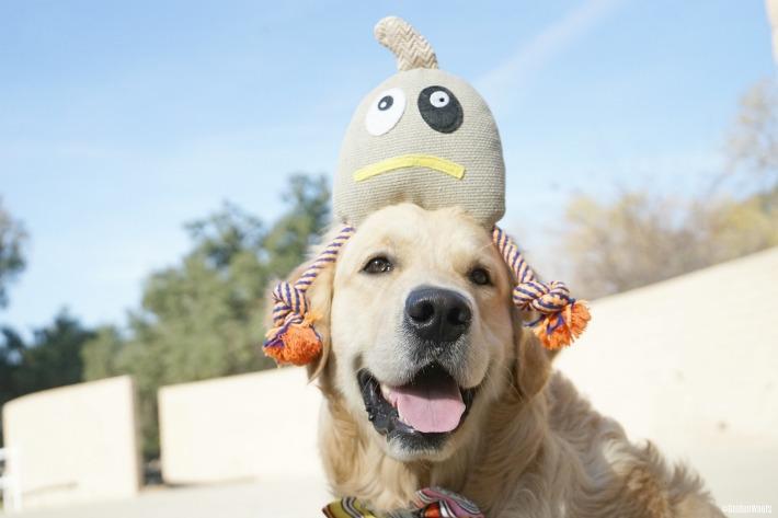 PoochMo dog toy