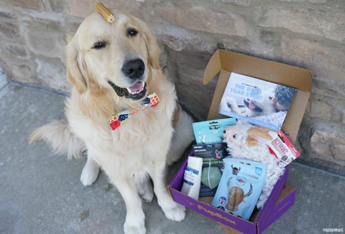 PupBox We Love Your Puppy