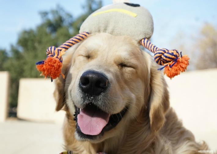 dog toy PoochMo