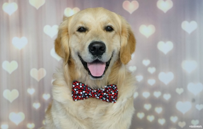 Golden Woofs Hearts Dog Bow Tie
