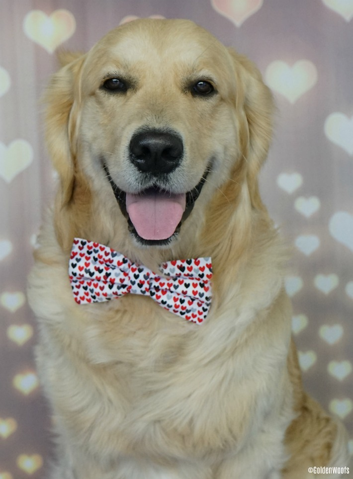 Happy February Dog Bow Tie