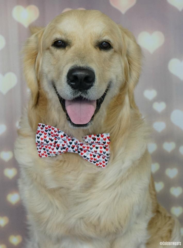 Happy February Dog Bow Tie